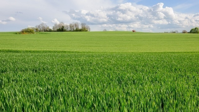 Landscape of lush green grass